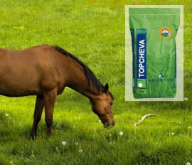 Advanta Topcheval + Headstart, speciaal voor paardenweide