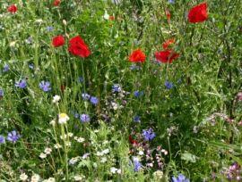 Advanta veldbloemenmengsel 1 foto 1